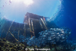 Jacks under Jetty... by Tunc Yavuzdogan 